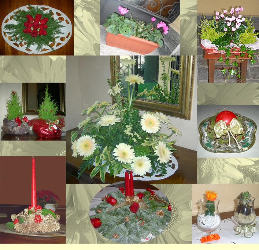 fiori piante e sementi